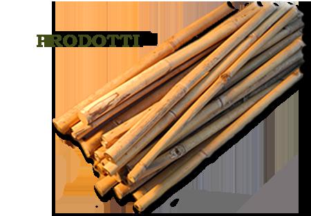 Fargesia robusta campbell for Canne di bambu per pergolati