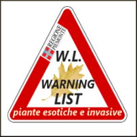 LOG invasive WL 200.jpg