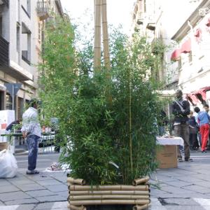 Bambufior fioriera in bambu 39 per allestimenti temporanei - Canne bambu in vaso ...