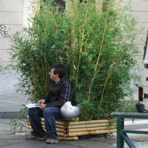 Bambufior fioriera in bambu 39 per allestimenti temporanei for Vendita piante bambu gigante
