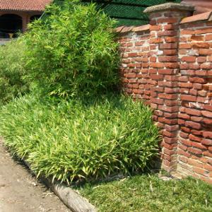 Bambubar barra di fissaggio della guaina bambustop for Vendita piante bambu gigante