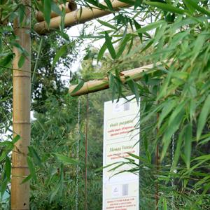 Canna di bambu 39 diam 06 08 cm for Vendita piante bambu gigante