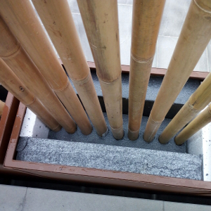 SBA canna bambu diametro 8cm 04