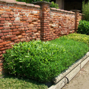 Bambustop guaina di contenimento dei bambu 39 invasivi for Vendita piante bambu gigante