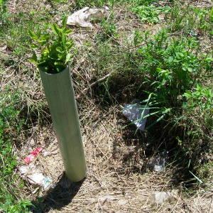 Protezioni tubolari shelter tubex for Vendita piante bambu gigante